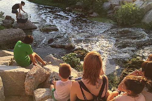 Miloca allibera quatre ànecs collverd al riu Besòs