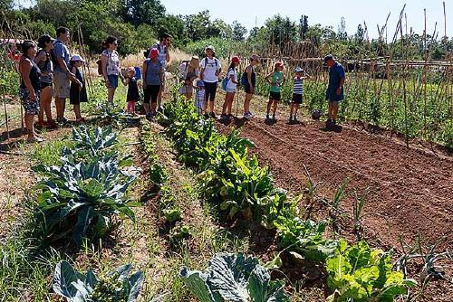Nou concurs públic per formar part de la llista d'espera dels horts de la Plana del Molí