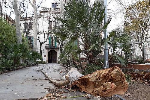 L'Ajuntament manté activat el Pla d'Actuació Municipal per vent i pluja