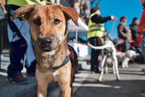 Salut Pública endega una campanya que promou l'adopció de gossos i gats
