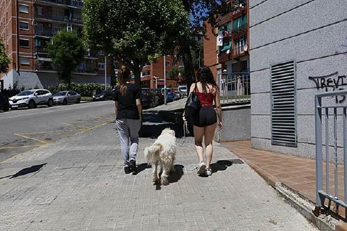 Salut Pública recorda en una nova campanya els espais d'esbarjo habilitats per a gossos