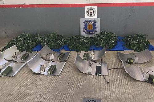 Els Mossos d'Esquadra i la Policia Local desmantellen una plantació de marihuana a Santa Perpètua