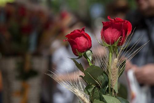 Les floristeries no podran obrir per Sant Jordi però sí vendre per internet i fer enviaments a domicili