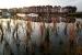 L'Ajuntament controlarà la població de peixos a la bassa naturalitzada del parc Central