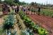 Els horts de la Plana del Molí, un espai verd amb funció social, de lleure i mediambiental