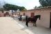 Nova jornada d'equitació adaptada amb membres de l'Associació de Disminuïts de Santa Perpètua