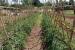 L'Ajuntament reposa les claus d'aigua robades als horts de la Plana del Molí
