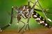 Salut Pública posa en marxa una nova campanya contra el mosquit tigre