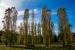 L'Ajuntament destina anualment uns 20.000 euros a tractaments fitosanitaris de l'arbrat urbà