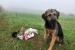 Residu Zero recull brossa amb l'ajuda d'una gossa d'atura
