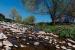 L'Aula del parc proposa conèixer la flora i fauna de la riera de Caldes