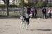 Salut Pública recorda a la ciutadania els espais d'esbarjo habilitats per a gossos