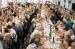 Ja es poden recollir les invitacions per al 75è homenatge a la gent gran de Festa Major