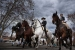 La Festa de Sant Antoni omplirà de cavalls i carruatges els carrers de Santa Perpètua