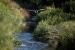 El confinament revifa la fauna i la flora a la riera de Caldes